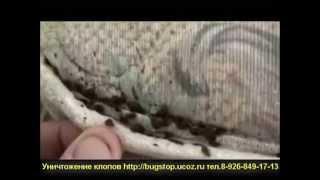 Уничтожение клопов в Москве и МО(, 2013-05-06T15:39:47.000Z)