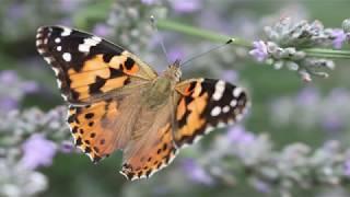 2019 08 03 Molenaarsgraaf. Bloemen, Bijen en Vlinders
