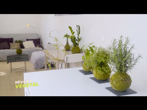 kokedama et ikebana pour une d coration d 39 int rieur zen mission v g tal m6 youtube. Black Bedroom Furniture Sets. Home Design Ideas