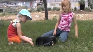 Teach Your Dog To Love Kids