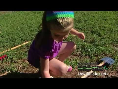 Nature at Home-Nature Play for Kids