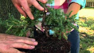 Starting Your Own Bonsai