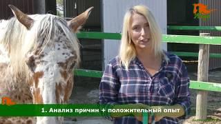 Как поймать лошадь в леваде?