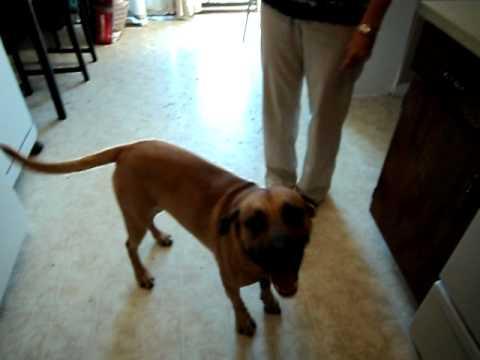 Yukon's Trick – Funniest Dog Trick Ever
