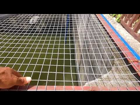 A VISIT TO MARK ANGEL FISH FARM; NEW INNOVATION IN POND CONSTRUCTION 2018