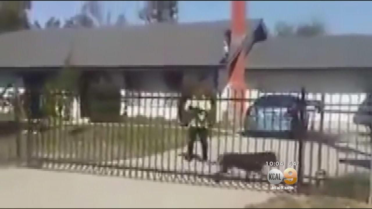 Caught On Tape: Feuding Neighbor Fatally Shoots Family's 2-Year-Old Dog In  Perris