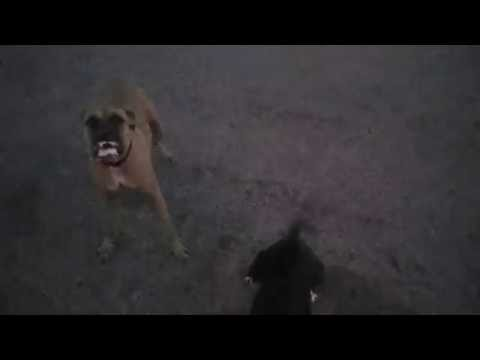 Dogs Charge Police Officer Meridian Idaho David Gomez