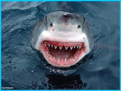 Requin à Marseille exceptionnel !!!!!