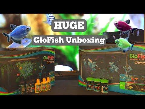 GLOFISH 5 AND 10 GALLON TANK UNBOXING