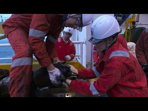 "IODP Expedition 365 ""Exploring the Fault Trace"" - Part 2"