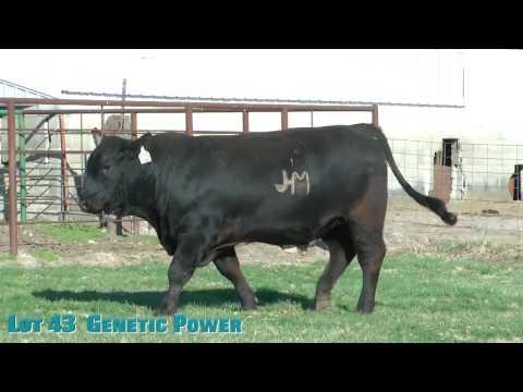 Lot 43  Genetic Power