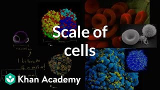Scale Of Cells