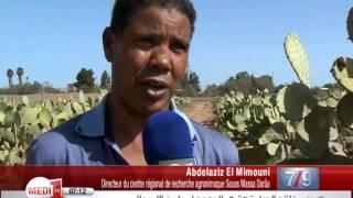 Maroc: Le cactus, une richesse nationale