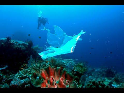 Sarah Lecus—Aquarium Lecture Series
