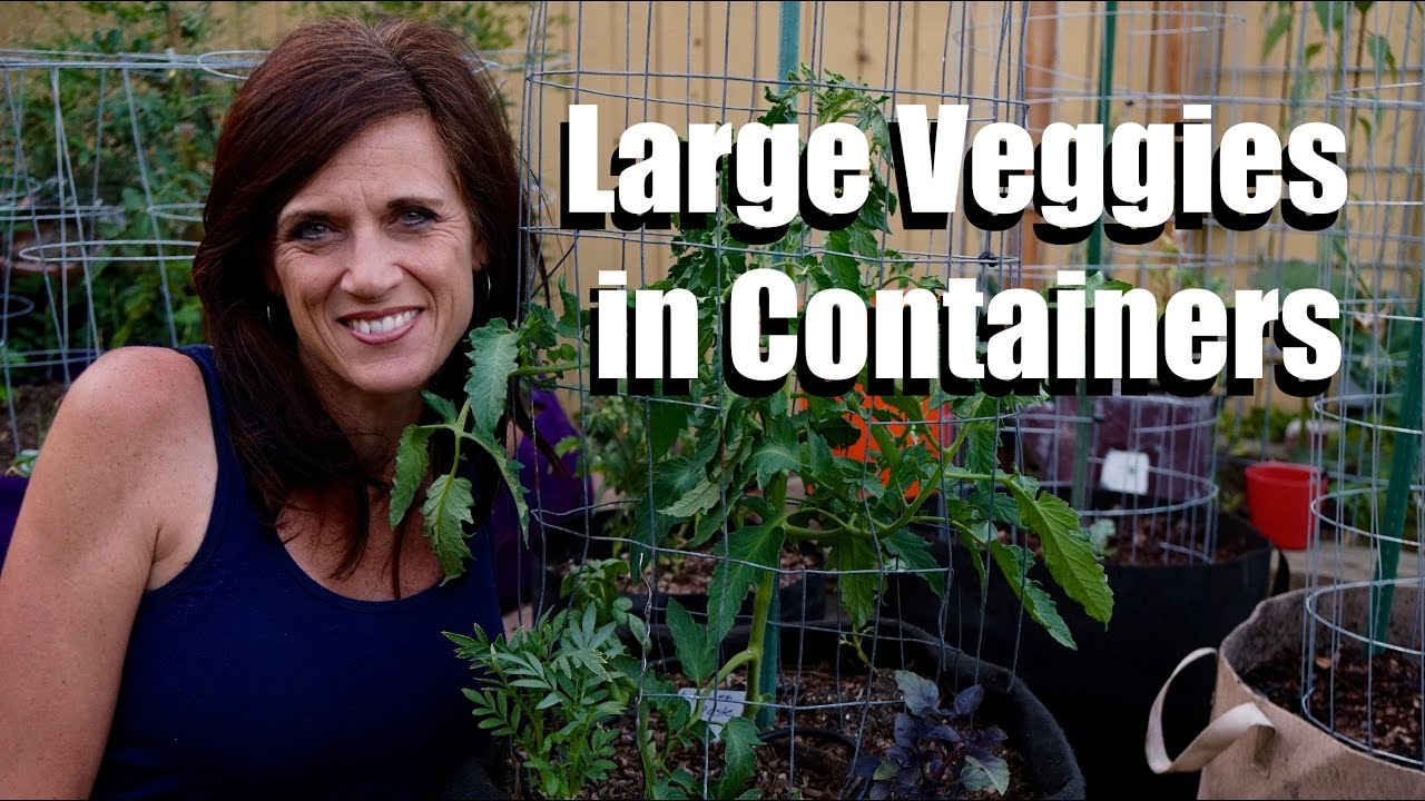 Growing Large Vegetables Fruits In Containers 1 Tips For Success