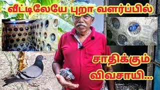 வீட்டிலேயே நாட்டு புறா வளர்ப்பில் சாதிக்கும் விவசாயி | Pigeon farm in tamil