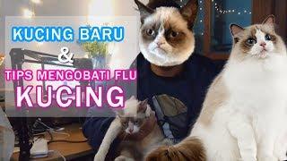 CARA MENGOBATI KUCING FLU DENGAN MUDAH #flukucing #obatkucing