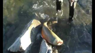 крутая рыбалка в сибири (такую вы точно не видели)