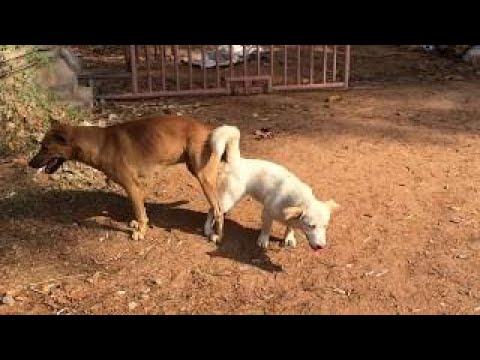 Countryside Dogs VS City Dogs Sweet Love Making #Part2
