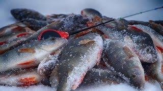 ПОЛНЫЙ ОТРЫВ НА БЕЗМОТЫЛКУ! Рыбалка на мормышку гвоздешарик! Супер ловля прямо в городской черте!