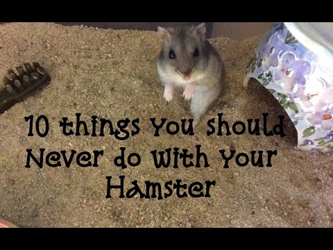 10 Things You Should Never Do With Your Hamster