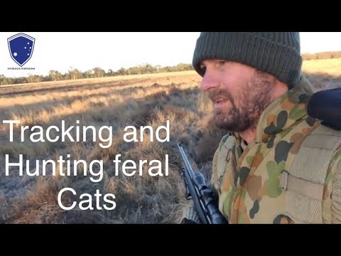 Survival Tips, Tracking And Hunting Feral Cats