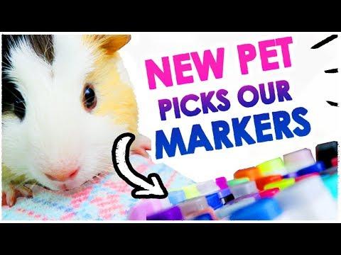my-pet-picks-my-art-supplies-🐹---3-marker-challenge!