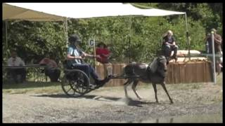 Keep Holding On - Horse Bloopers 2013