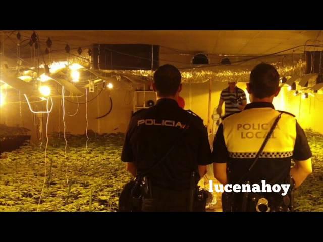 Vídeo Noticia: Desmantelada una plantación industrial de marihuana en Lucena