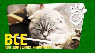 Снова Про Выбор Котенка (Часть Вторая). Все О Домашних Животных