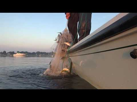 Striper Strikes Everywhere! CT River Live Bait & Topwater Bass