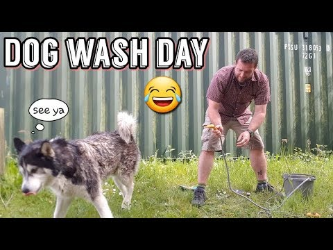 Washing my dog | Great RESULT