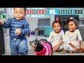 BIG BABY vs LITTLE DOG, EPIC SHOWDOWN!
