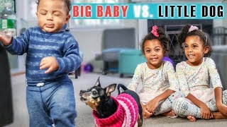 BIG BABY vs LITTLE DOG, EPIC SHOWDOWN!