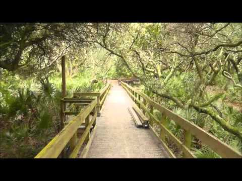 Cumberland Island, GA Maritime Forest