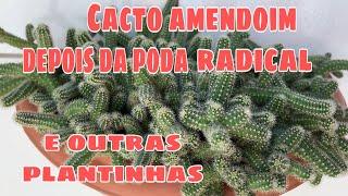 Cacto Amendoim depois da poda e outras plantinhas