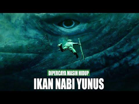 Benarkah Ikan Yang Memakan Nabi Yunus Masih Hidup ? Ensiklopedia Al Fatih