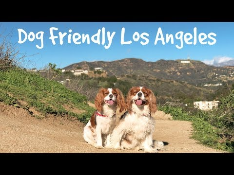DOG FRIENDLY ACTIVITIES IN LA | A Weekend in our life in LA
