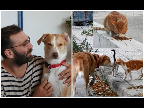 Rescue Dog Helps her Owners Feed 30 Stray Cats on her Daily Walk