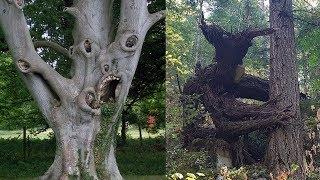 Bäume, die aus den Tiefen der Hölle stammen!