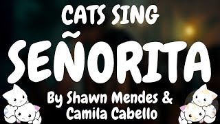 Cats Sing Señorita by Shawn Mendes & Camila Cabello | Cats Singing Song