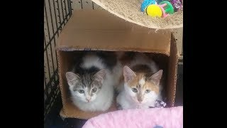 Quilted Kitten Fosters Granite And Caramel