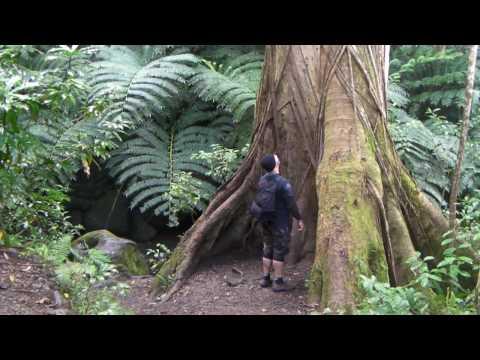 """MANOA FALLS HD """"Waydes World Hawaii"""