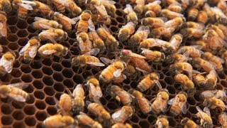 UA students abuzz about honey bee research