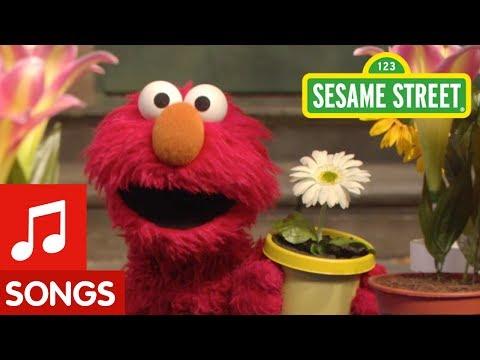 Sesame Street: The Flower Song