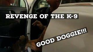 K9 Police Dog Gets Revenge on Suspect!!!!