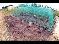 Ep41: Strawberries & Kale * ALLOTMENT GARDEN HAPPINESS *