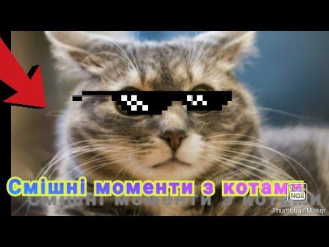 Смішні моменти з котами