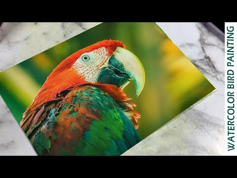 Watercolor painting for beginners Parrot easy | Kalaayug