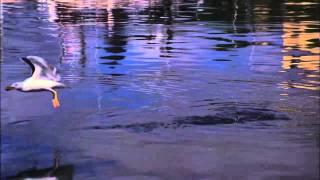 Acid Precipitation - A Sustainability Documentary